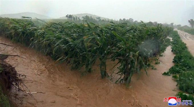 北 朝鮮 台風 被害