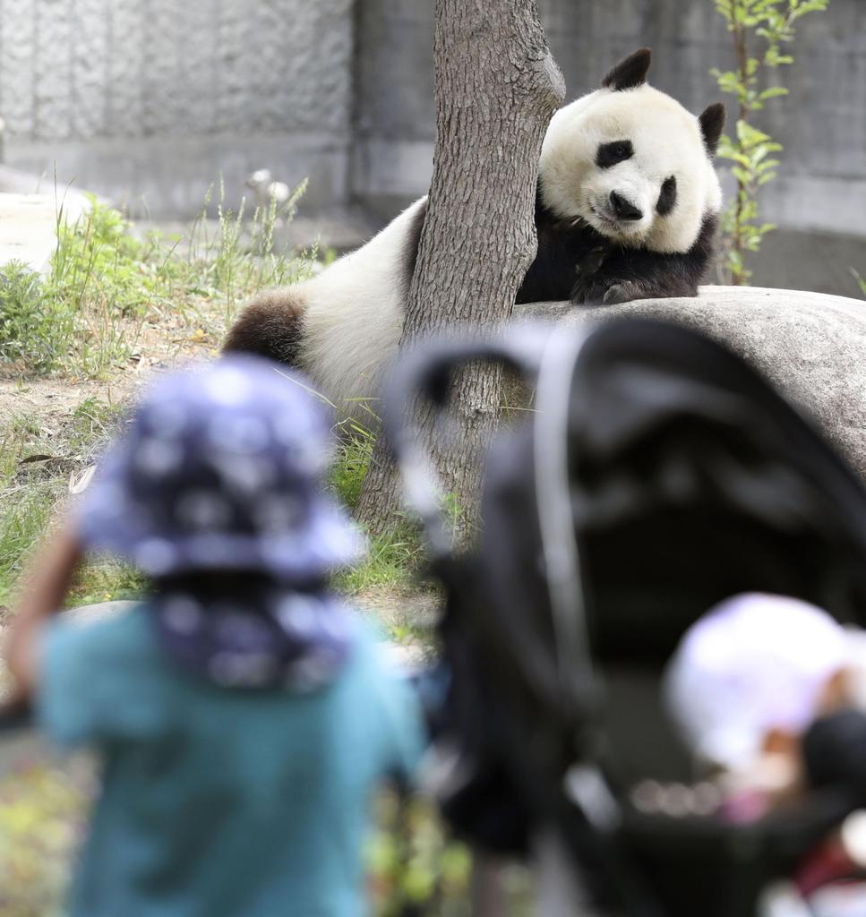 動物園 神戸 パンダ 王子