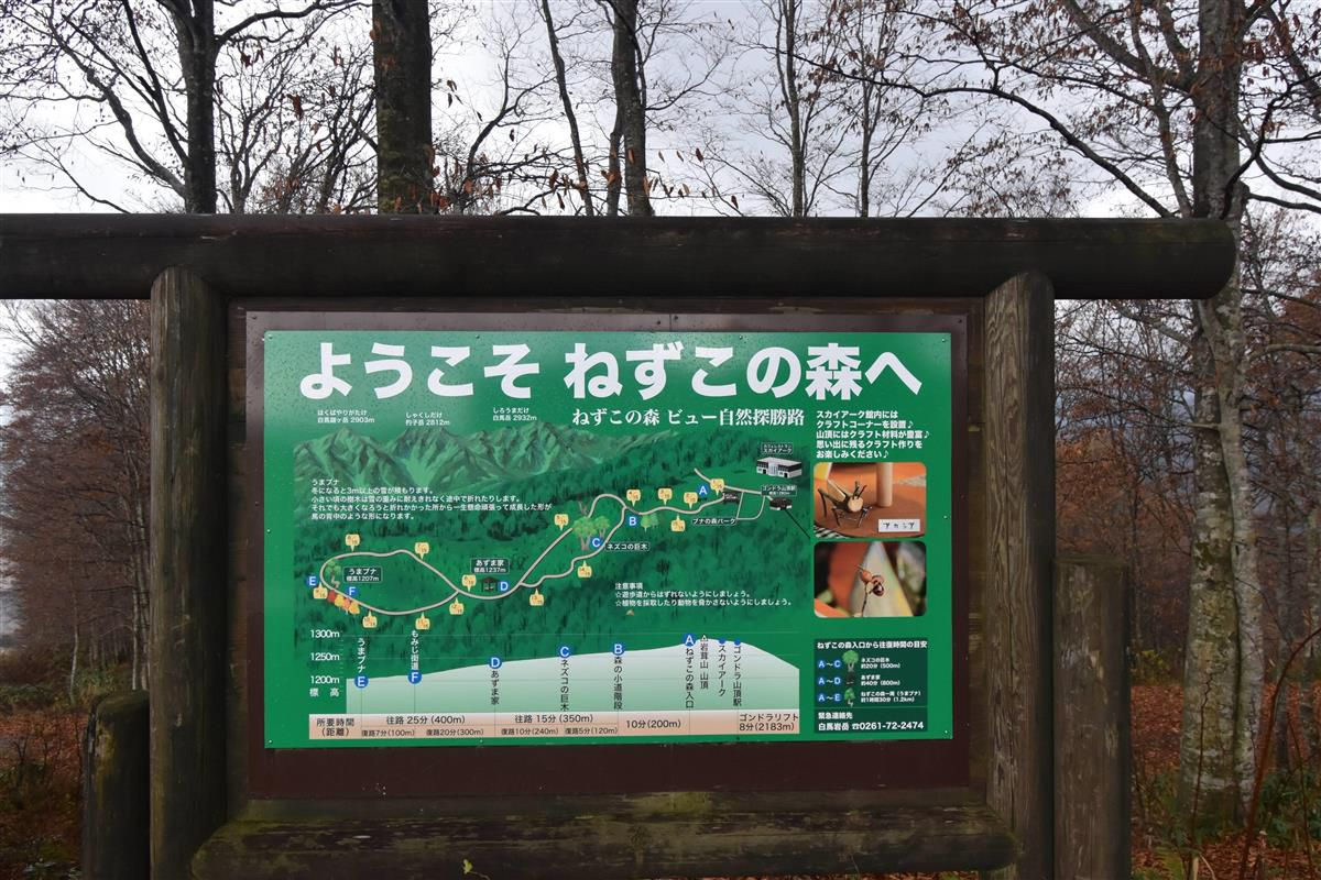 岩岳山頂にある遊歩道「ねずこの森」の案内板=長野県白馬村(原田成樹撮影)