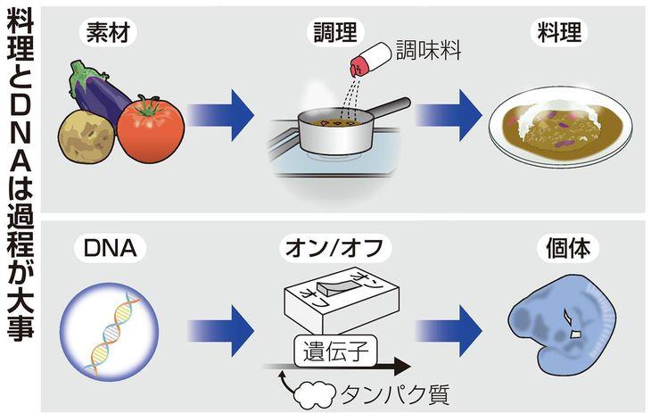 【理研が語る/科学の中身】料理とDNA