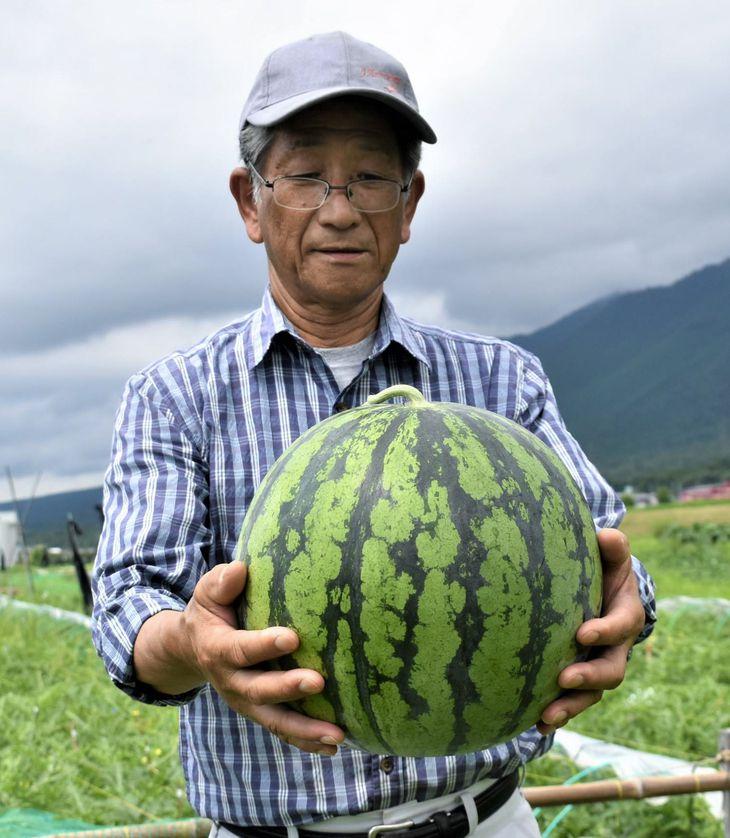 大玉で8~10キロの重さになるという比良すいかを持つ伊藤久司さん=大津市