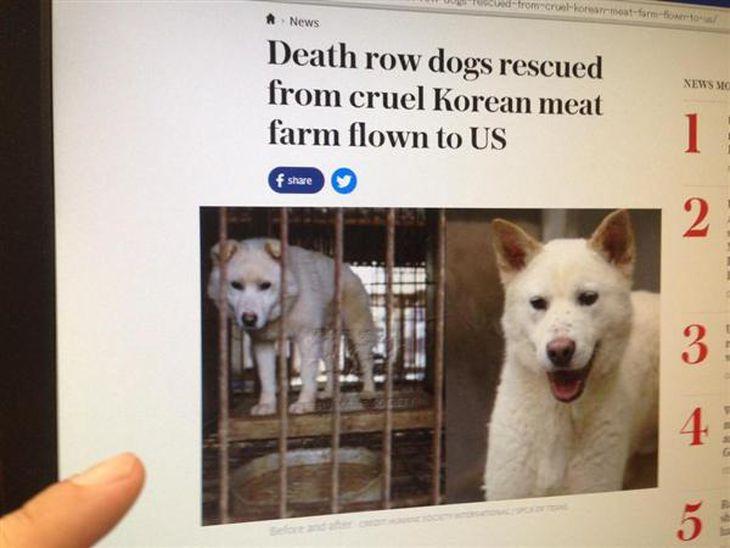 【エンタメよもやま話】年300万匹犬喰い韓国「苦しめて殺した方が美味!」 残虐文化に欧米が激怒、救出騒ぎ
