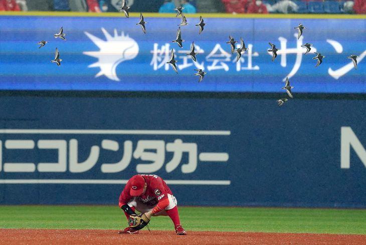 8回裏、鳥の群れをしゃがんで避ける広島・小園海斗=横浜スタジアム(撮影・斎藤浩一)