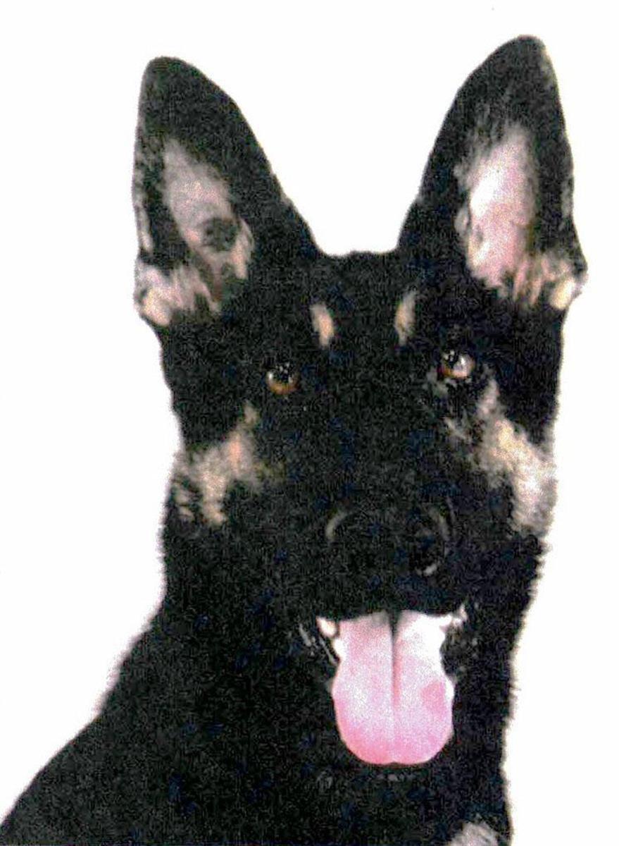 警察犬「クレバ号」(兵庫県警提供)