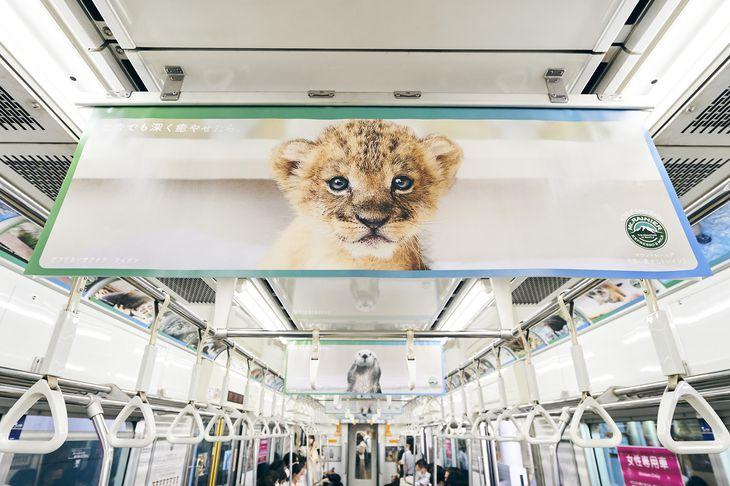 「マウントレーニア」の電車広告