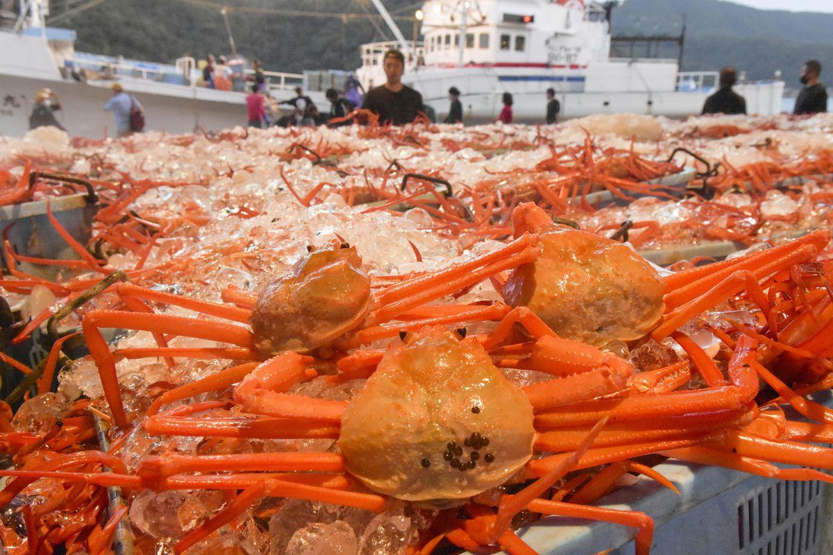 水揚げ量日本一の境港に初水揚げされた、日本海のベニズワイガニ=7日早朝、鳥取県境港市