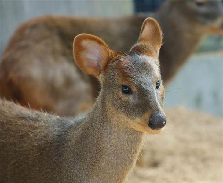 2歳で死んだプーズーのピナ(県こども動物自然公園提供)