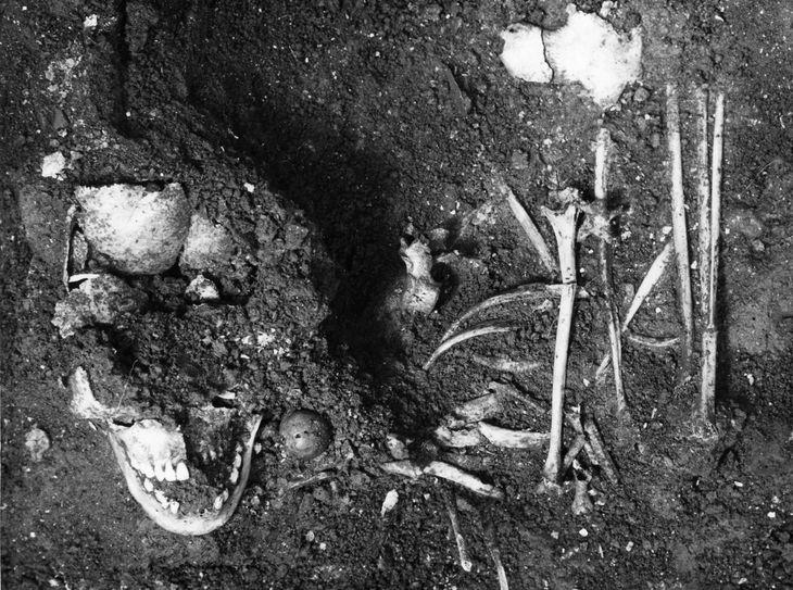介護を受けて成長したとされる縄文時代の人骨。北海道洞爺湖町の入江貝塚で見つかった(縄文遺跡群世界遺産保存活用協議会提供)