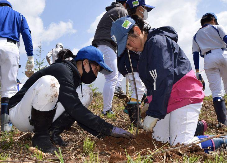 アオダモの苗木を植樹する球児=岩手県矢巾町