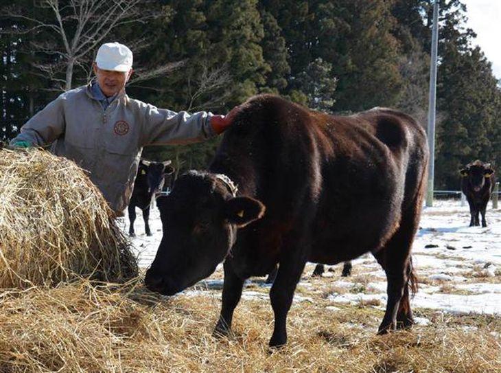 被曝した牛の飼育を続ける山本幸男さん=2月3日、福島県浪江町(野田佑介撮影)