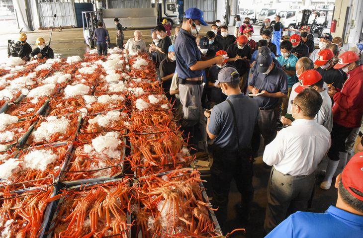 初水揚げされたベニズワイガニの競りに臨む仲買人ら=7日朝、鳥取県境港市