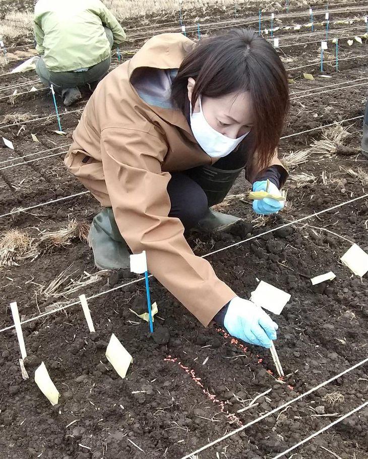 イネの初冬直播き栽培 挑戦農家が5倍増