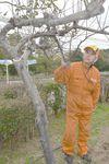現在の「希望リンゴ」を見つめる田村治典さん
