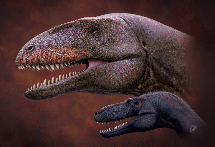 ウルグベグサウルス・ウズベキスタネンシス(奥)の復元画。同じ地層から化石が産出するティラノサウルスの仲間(手前)より大型であることが化石から分かった(ジュリアス・チトニー画)