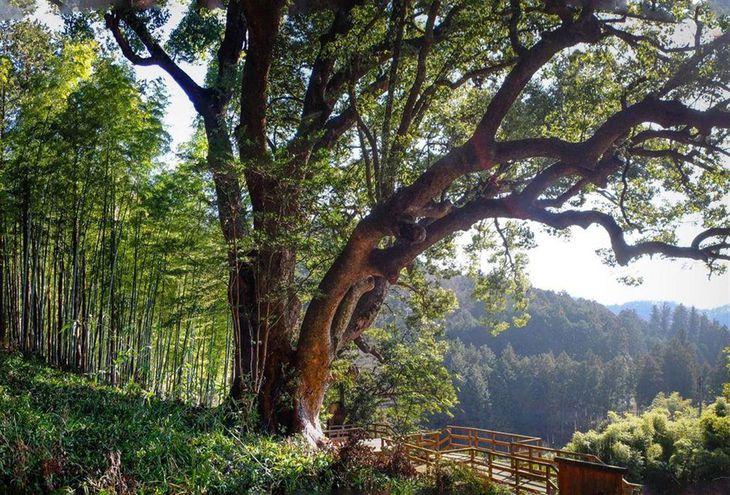 インスタグラムに投稿された「上谷の大クス」の写真(埼玉県教育委員会提供)