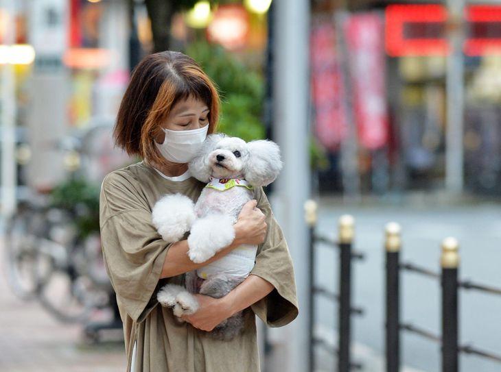引退繁殖犬のトイプードルのココアを抱きカフェに訪れた里親の女性=大阪市東成区