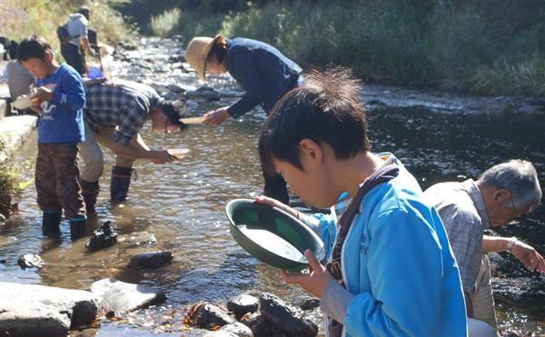 長浜市の草野川で砂金を探す参加者たち