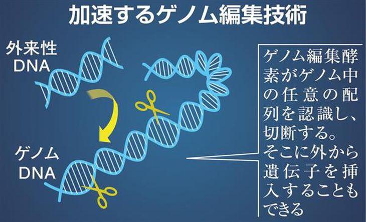【理研が語る】あれよという間に農作物から人の受精卵まで…漠然とした不安、「ゲノム編集技術」とどう付き合うか