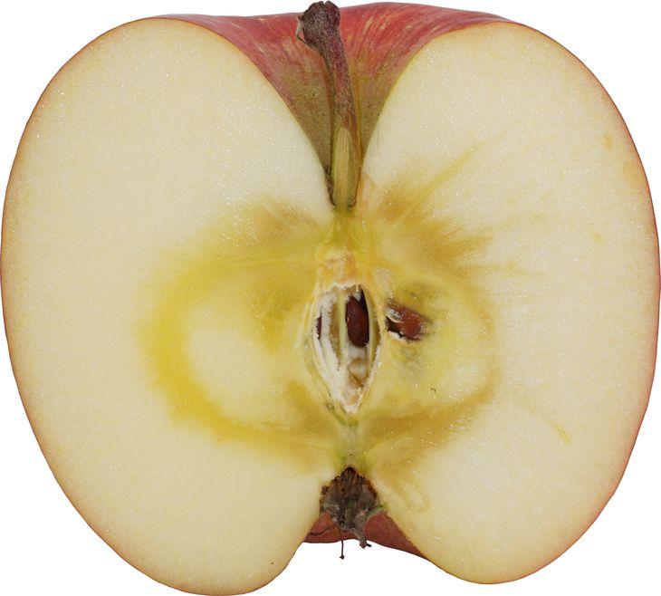 高い付加価値がつく「蜜入り」のリンゴ(和田博史教授提供)