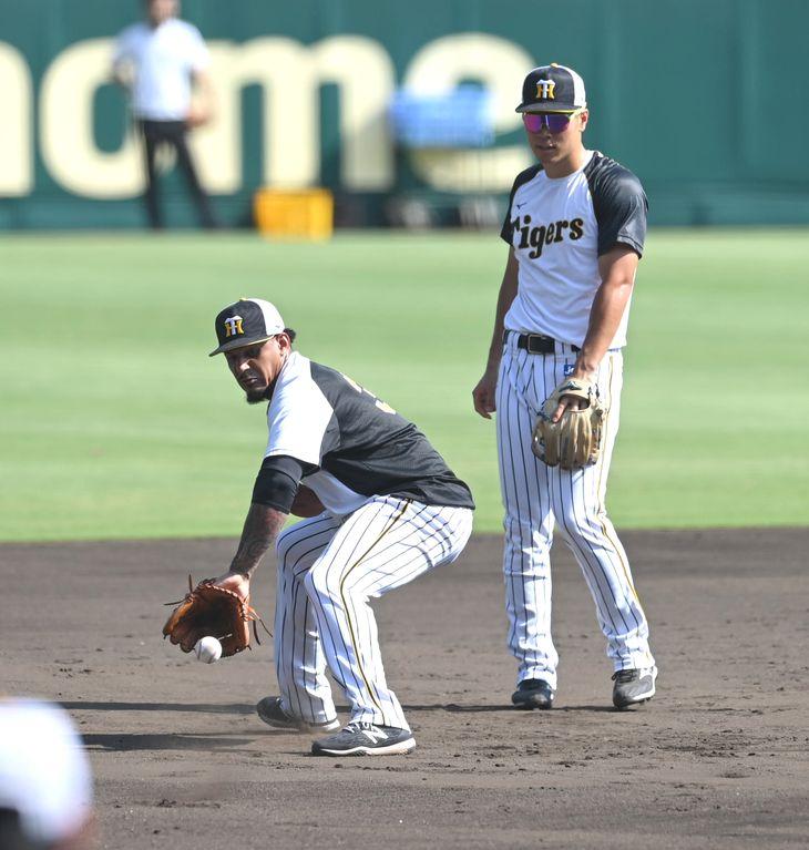 試合前練習 三塁でノックをうける阪神・マルテと佐藤輝(右)=甲子園球場(撮影・水島啓輔)