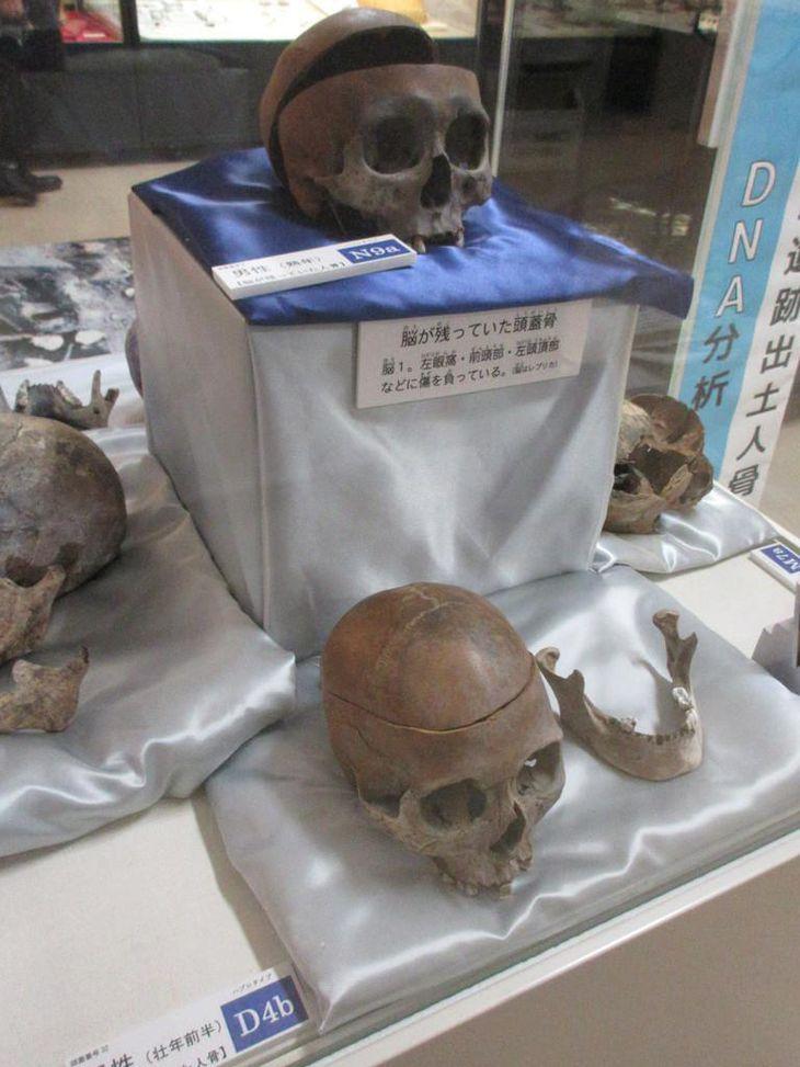 鳥取の出土人骨をDNA解析 日本人は複雑なハイブリッド?