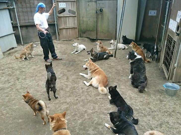 犬の体罰ありか、なしか 「訓練」に賛否両論