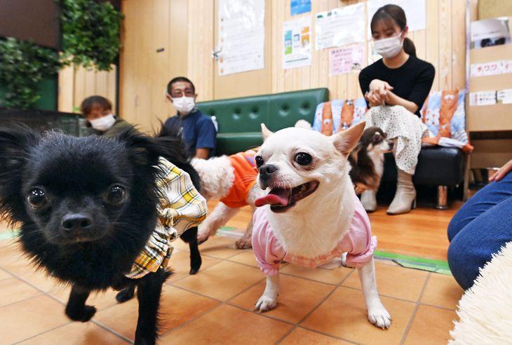 利用者とふれあう保護犬たち=大阪市住吉区