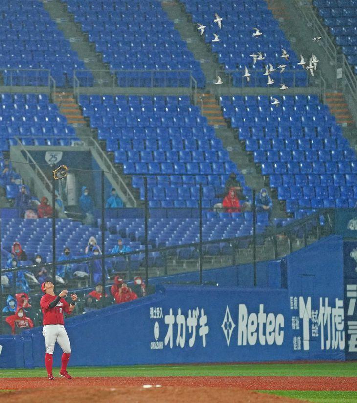 8回裏、鳥の群れが近づかないようにグラブを上に投げる広島・上本崇司=横浜スタジアム(撮影・斎藤浩一)