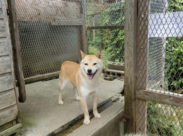 シェルターで飼育されている保護犬。審査を重ねた上で、適切な里親に譲渡される=大阪府能勢町